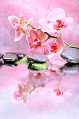 Composition with beautiful blooming orchid with water drops and
