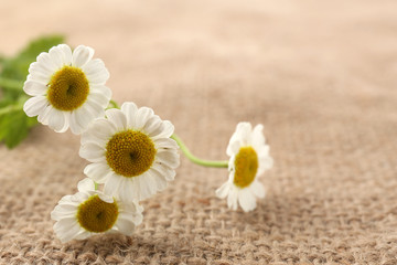 Beautiful wild flowers on burlap background, close up