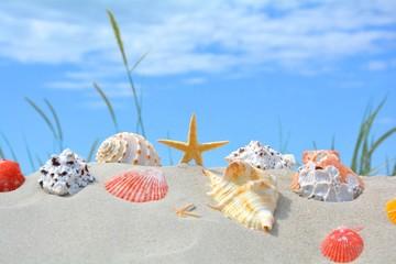 Düne mit Muscheln und Seestern
