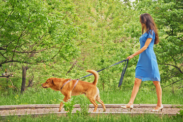 Beautiful girl is walking with dog