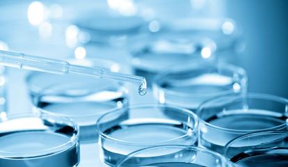 Cell Culture Plate in bio laboratory