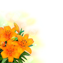 lily flowers bouquet on white background