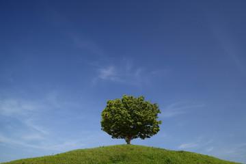 丘の上の1本の木