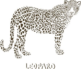 Leopard vector illustration