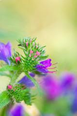 Fiore viola sfondo verde