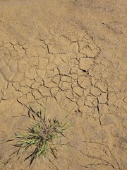 Dry ground of cracked dusty clay with deep marks