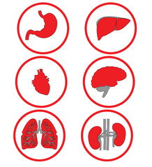 Red icons internal organs on white. Raster