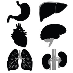 Icons of the internal organs on white. Raster