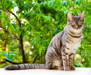 Tabby cat sits on a white surface near green leaves