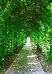 a garden tunnel