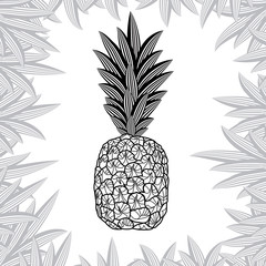 pineapple isolated on white background. Vector illustration