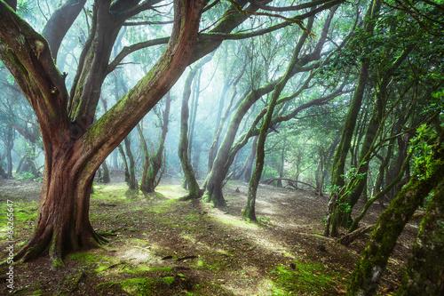 Fototapety, obrazy : unusual forest