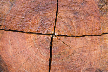 Cross section of log texture background.