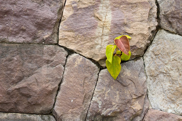 Green plant in the rocks wall