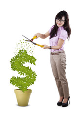 Full length businesswoman cutting plant