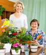 Two mature women taking care of domestic plants