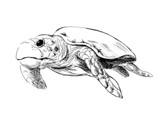Hand drawing caretta. Vector illustration