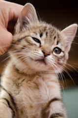 掻かれて喜ぶ子猫