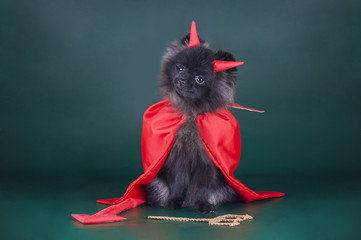 Pomeranian in a devil costume