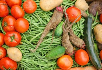 Bio Gemüse in einer Kiste