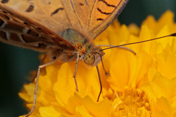 Macro photo of a butterfly on a yellow flower