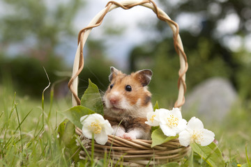 Little hamster in a basket with flowers