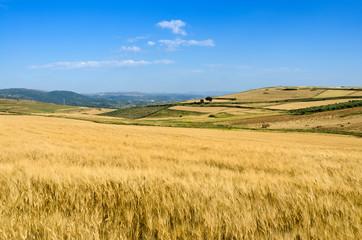 Sardegna, campi di grano in Trexenta
