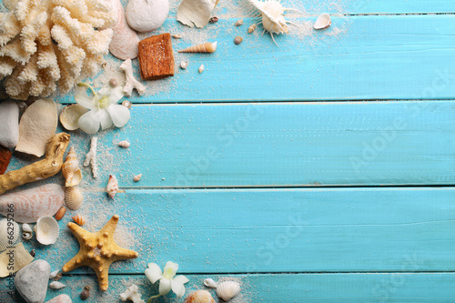 Seashells on wood - 66295266