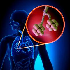 Lungs Alveoli - Human Respiratory System Anatomy