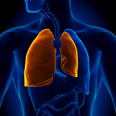 Pneumothorax - Collapsed Lung