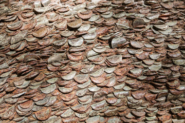 Coins in a tree trunk.