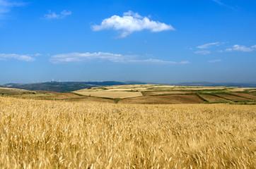 Sardegna, Trexenta, Suelli, paesaggio rurale