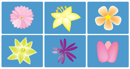 vector colorful flowers set on the blue background