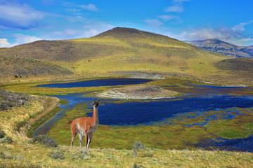 The superficial lake and guanaco
