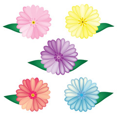 vector Gerbera colorful set on the white background