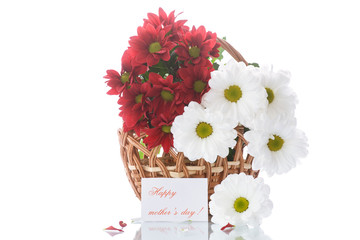 red and white chrysanthemums in a basket