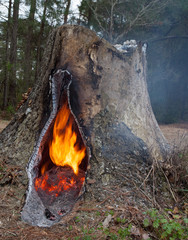 Hollow stump fire