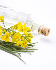 Rape flower on white background