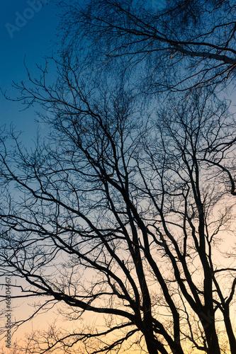 canvas print picture Bäume am Feld