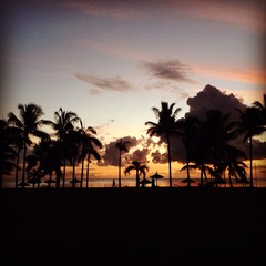 Silhouettes of palm trees on sunset on Mauritius