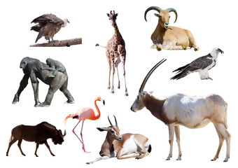 Oryx Scimitar  and other African animals