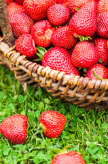 Strawberry fruits basket on green grass