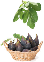 sweet fig  fruits with leaves in a basket