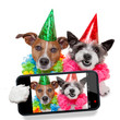birthday dogs selfie