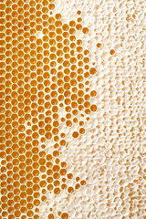 honey making in honeycombs