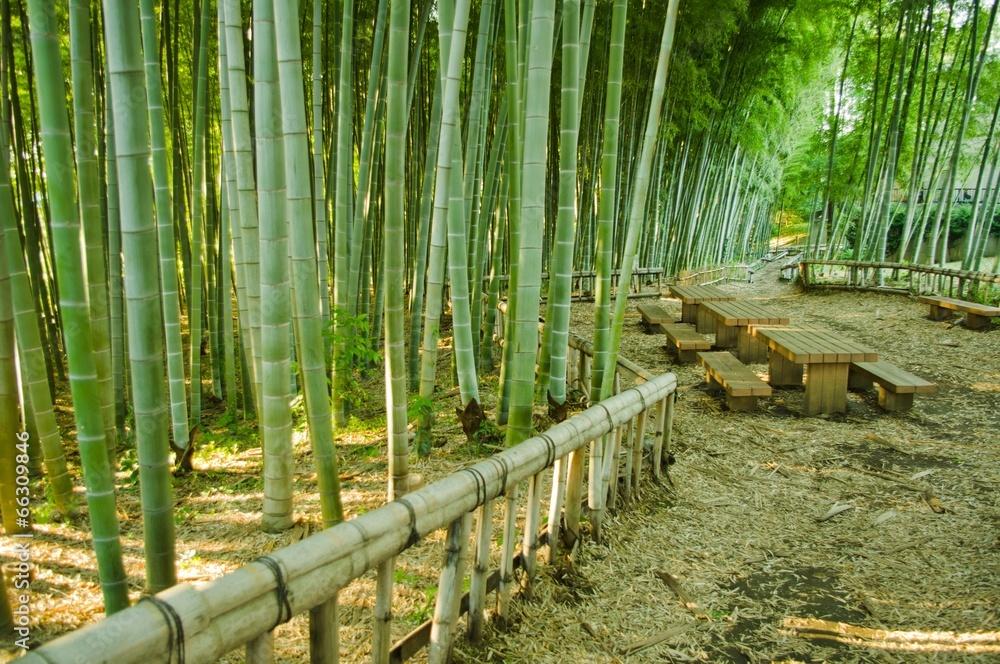 Ławeczki w bambusowym parku - powiększenie