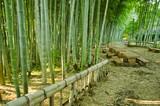 Fototapeta Ławeczki w bambusowym parku