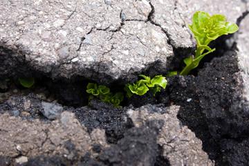 Побег растения пробивает асфальт