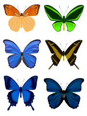 Set of Butterfly isolated on white. Vector Illustration