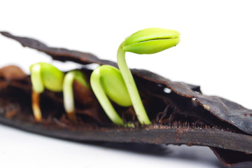 seed germination on isolated background